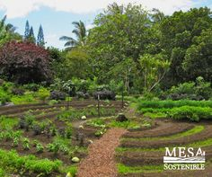 #Gardens and small farms are more efficient and grow healthier #food than large scale agriculture. #Permaculture #nutrition @MesaSostenible