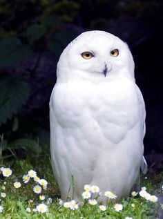 the death of Hedwig saddened me the most.