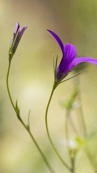 Fioletowe polne kwiaty