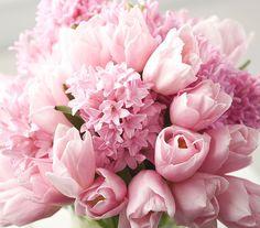 Pasztellben is gondolkodhatsz. A jácint nemcsak szép, de az illata is isteni.