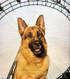 Photo of Rex for fans of Komissar Rex.
