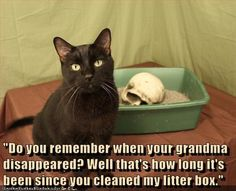 I Can Has Cheezburger? - Page 3 - Lolcats n Funny Pictures - funny pictures - Cheezburger