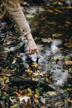Photography, water, leaves, autumn, fall, aesthetic,