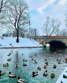 Wintry Riga #bitsofbaltics #visitlatvia #newdestinations #latvia #visitriga Art Nouveau, Riga Latvia, Christmas Greetings, Travel Pictures, Travel Guide, Beautiful Places, World, Holiday, Nature