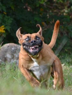 Scary pet faces: scary dog face