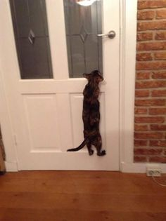 """""""I see you in there.  Get up off the sofa and let me in."""""""