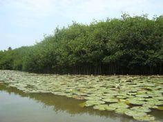 Estero Palo Verde, en Colima