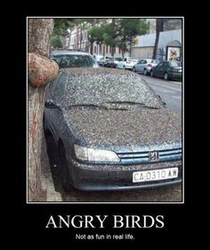 Funny Bird Photo: what angry birds do, do, do!