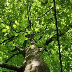 https://flic.kr/p/szbKkw | How green is it up there? #upsticksandgo #green #trees #glenhowepark #wharncliffeside #unitedkingdom #travel #explore #naturephoto #travellingtheworld #uk #michfrost