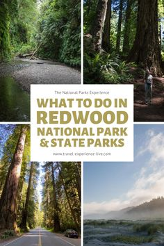 What to do in Redwood National Park and State Parks, California. Stuff To Do, Things To Do, Good Things, Beach Camping, State Parks, Bridal Dresses, National Parks, Wildlife, California