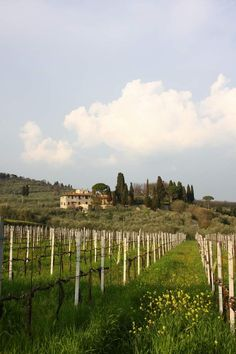 Flowers in the vineyard