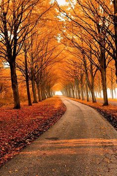 I would love to walk down this path on a brisk fall day!