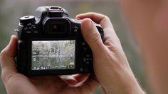 Câmera Canon T6s Review  Uma das melhores marcas para se trabalhar no ramo da fotografia a Canon tem superado seus limites e recriado o modo de capturar com suas incríveis câmeras que disponibilizam ainda na classe das semiprofissionais opções de qualidade e requinte que todo fotógrafo deseja e merece. Um dos modelos que...
