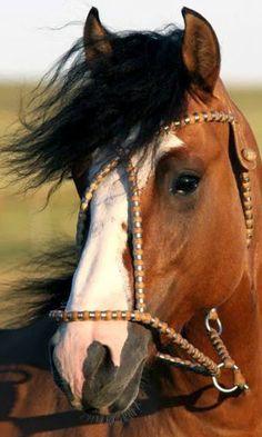 Caballos Criollos - todo sobre el caballo criollo -: 01/25/15