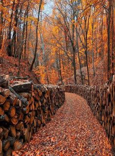 Shared by Autumn Path Autumn Scenes, Autumn Aesthetic, Fall Wallpaper, Wood Wallpaper, All Nature, Autumn Nature, Morning Sun, Autumn Photography, Fall Photos