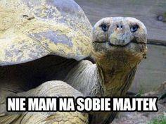 Najśmieszniejsze zwierzaki internetu - odcinek 6 - strona 4 - komediowo.pl