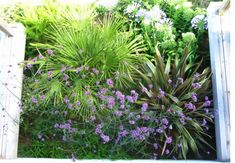 Garden designer of contemporary plant borders Mawnan Smith Cornwall Plant Design, Garden Design, Outside Plants, Falmouth, Cornwall, Beautiful Gardens, Contemporary, Planting, Garden Ideas