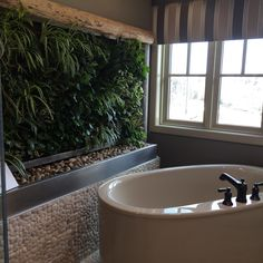 Loving this living wall in the bathroom.