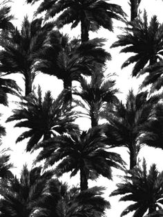 Palm tree pront pattern black white