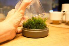 滴がぽたぽた。ミニチュアな苔を育てる癒し鉢植え「SANCTUARY」   IDEAHACK
