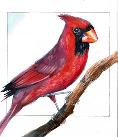 Coloring a Red Cardinal with Copic Markers