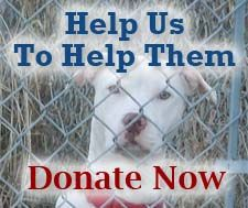 Help us to help rottweilers and pitbulls. Donate now.