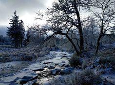 Das Hochmoor Hohes Venn an der belgisch-deutschen Grenze ist außergewöhnlich facettenreich. Für jeden, der unberührte Natur hautnah miterleben möchte, ist es genau das richtige Ausflugsziel. Das Ho…