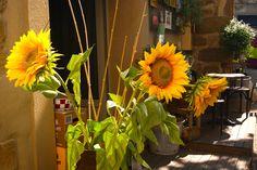 Tournesols en Provence