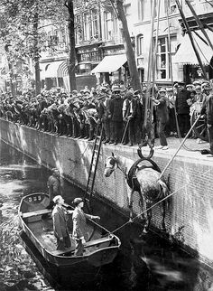 A horse being pulled from the canal. 1929, Amsterdam.