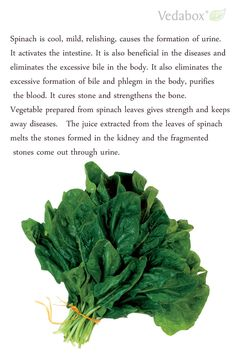 Spinach is cool, mild, relishing, causes the formation of urine. It activates the intestine. It is also beneficial in the diseases and eliminates the excessive bile in the body. It also eliminates the excessive formation of bile and phlegm in the body, purifies the blood. It cures stone and strengthens the bone. Vegetable prepared from spinach leaves gives strength and keeps away diseases.