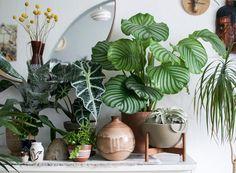 O verde dentro de casa ajuda a relaxar e nos conecta à natureza  (Foto: Igor Josifovic/Happy Interior Blog)