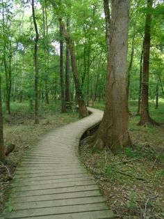 Congaree National Park has 11 stunning trails winding through the acres here. Temperate Deciduous Forest, Congaree National Park, Park Pictures, Growing Tree, Outdoor Activities, South Carolina, Wilderness, Acre, Trip Advisor