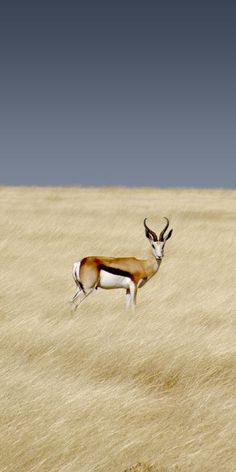 NAMIBIA - Etosha National Park - This park is home to114 mammal species as well as 340 different types of birds.