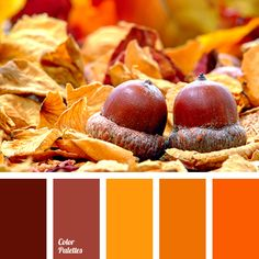 bright orange color, color for room decoration in Halloween, color of pumpkin, color palette for halloween, colors for Halloween, dark-orange color, fall colors, fall colors 2016