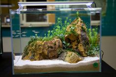Live Freshwater Catfish - Find incredible deals on Live Freshwater Catfish and Live Freshwater Catfish accessories. Let us show you how to save money on Live Freshwater Catfish NOW! Tropical Freshwater Fish, Freshwater Aquarium, Tropical Fish, Betta Fish Tank, Discus Fish, Fish Tanks, Planted Aquarium, Aquarium Fish, Cichlid Aquarium