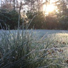 Haven klædt i Hvidt idag  Jeg håber at du får en dejlig weekend! Tusind tak for jeres bestillinger igår  de bliver sendt på mandag  #webshop #frost #smukdag #havenklædtihvidt #langsomstart #harstadigmorgenhår