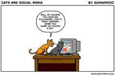 Why cats are probably not the best social media managers!