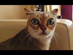 very-funny-cats-tears – funny pictures
