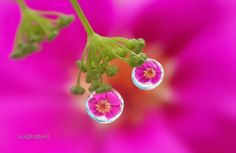 two drops flowers by karayelim on 500px