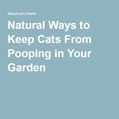 want to keep cats away and from going potty in your yard get a glass jar put 3 4 white vinegar