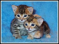 cute+kitty+10.jpg (image)