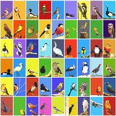 Europese vogels - Pop art - Schilderij