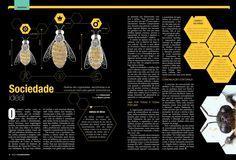 Revista Mundo dos Bichos