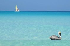 Varadero, Cuba (Arenas Blanca / Barcelo Solymar Playa Blanca) Varadero Cuba, 50 Shades, Destinations, Traveling, Explore, Animals, Sands, Beach, Travel