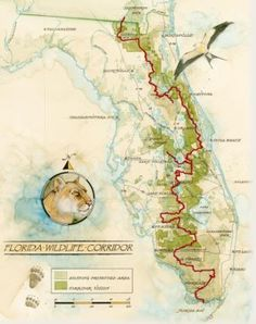 Florida Wildlife Corridor - Carlton Ward traveled this wilderness route of 1000 miles in 100 days.  There is still time to protect a continual wildlife corridor that spans the entire state.