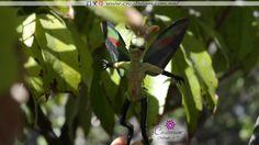Plant Leaves, Plants, Woods, Butterflies, Faeries, Plant, Planets