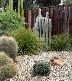 danger garden: The Ruth Bancroft Garden; Part 2, the garden