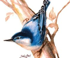 Blue Nuthatch Watercolor Painting Bird by judithbelloriginals
