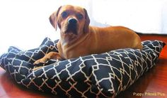 Dog Bed Covers Modern Set of Two Medium Dog by PuppyPillowsPlus, $70.00