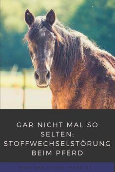In diesem Beitrag erfährst Du die Symptome für eine Stoffwechselstörung beim Pferd.